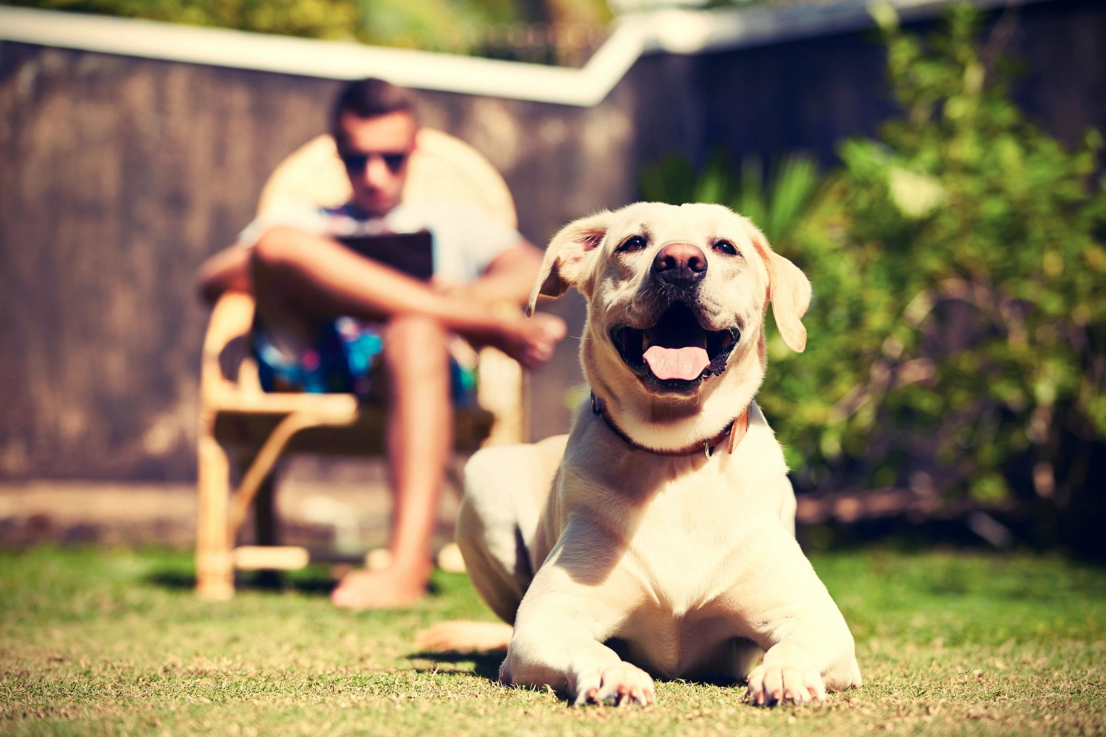 Top 10 Legal Issues Arising from the Calgary Responsible Pet Ownership Bylaw